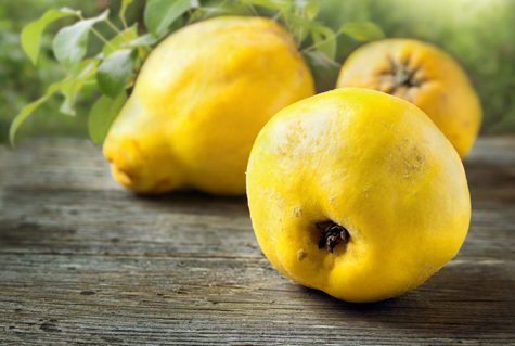 An Introduction to An Ancient Fruit — Quince | Edible Paradise