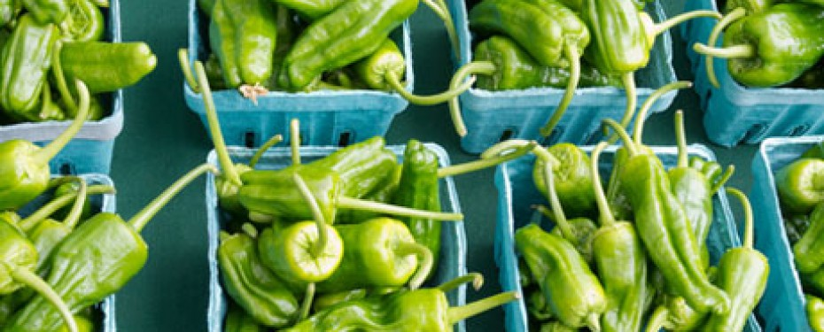 Padron-peppers-1