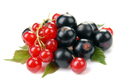 red_blue_currants-1